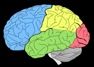 brain-1007686_960_720-300x214.png